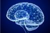 Donate brain
