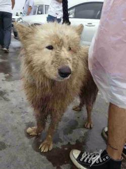 China-dog