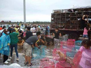 China-dog-rescue
