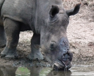 THANDI_DRINKING_4_MARCH_160131