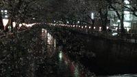 Megurogawa_night