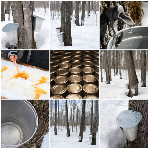 Vermont Maple Open House
