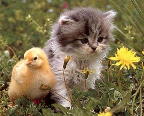 Gato quiere llevar una flor en su viaje