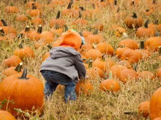 Pumpkin Picking in Central Colorado