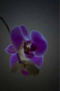 BeFunky_orchid-21170_640.jpg