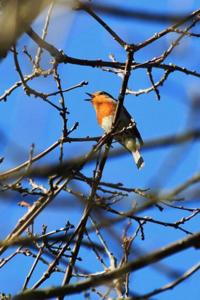 Bird-287109_640