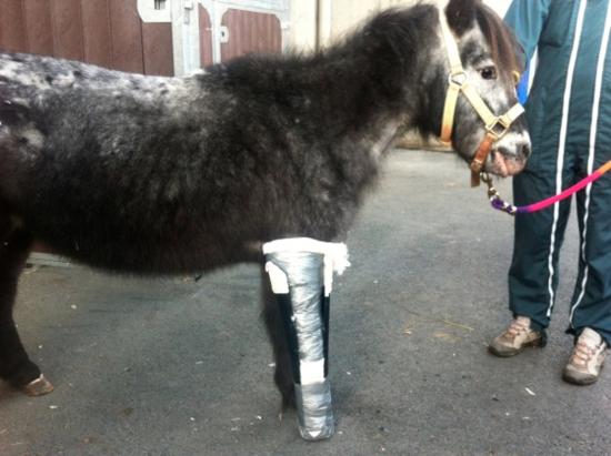 Iris-the-pony