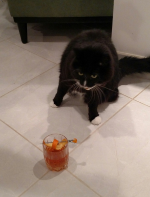 A photo with a cat and booze?  It's a perfect Internet combination.