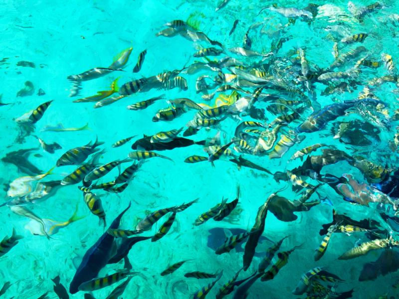 CancunFish2016Pensiero