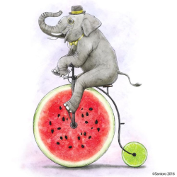 Elephantmelon