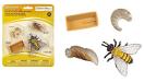 : Safari Ltd Safariology the Life Cycle of a Honey Bee