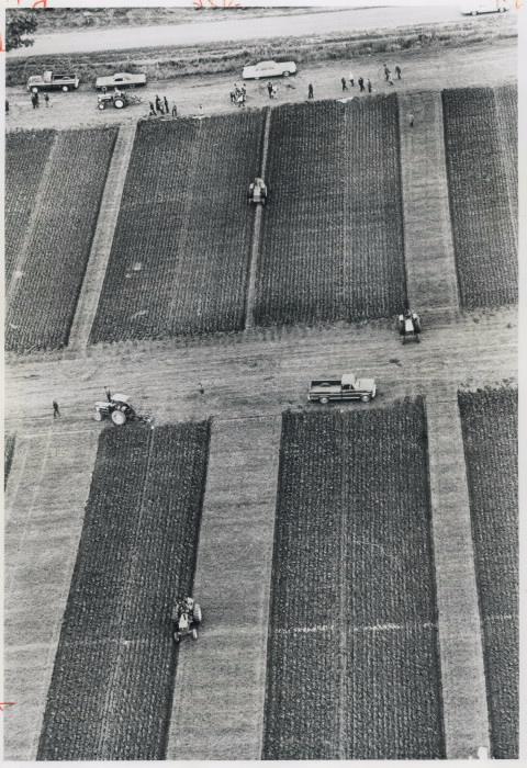 Aerial view of geometric patterns plowed